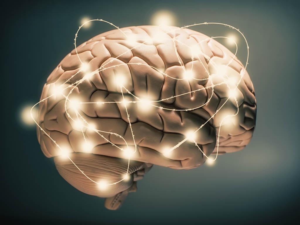 brain consciousness ile ilgili görsel sonucu