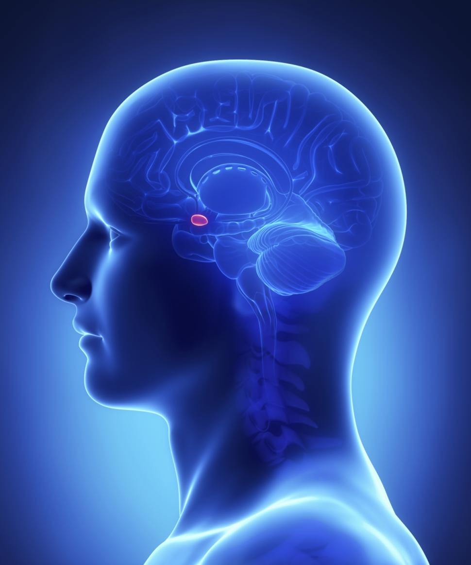 Best images about Brain EEG Neurofeedback on Pinterest   Your brain   Anxiety and Depression